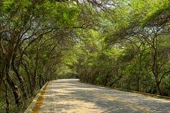 Los árboles alrededor de la manera les gusta un túnel Foto de archivo libre de regalías
