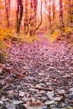 Los árboles alrededor de un pequeño camino, trayectoria y secan las hojas en la tierra Foto de archivo