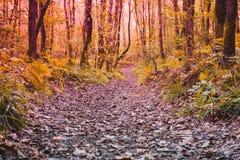Los árboles alrededor de un pequeño camino, trayectoria y secan las hojas en la tierra Fotografía de archivo