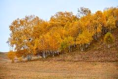 Los árboles amarillos en el prado Imagenes de archivo