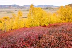 Los árboles amarillos y rojos en el prado Imágenes de archivo libres de regalías