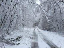Los árboles caidos en el camino en invierno asaltan a Quinn Imagen de archivo libre de regalías