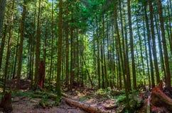 Los árboles caidos y los tocones impedidos cubiertos con el musgo mienten en el gro Imagen de archivo libre de regalías