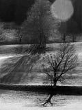 Los árboles calvos por la mañana hacen excursionismo en blanco y negro Imagenes de archivo