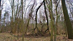 Los árboles cayeron abajo Foto de archivo