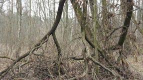 Los árboles cayeron abajo Imágenes de archivo libres de regalías