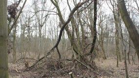 Los árboles cayeron abajo Fotografía de archivo libre de regalías