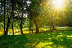 Los árboles cerca de una charca en ciudad parquean en la puesta del sol Imagen de archivo libre de regalías