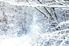 Los árboles cerca del río se cubren con la nieve blanca fotografía de archivo