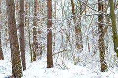Los árboles cerca del río se cubren con la nieve blanca imagen de archivo libre de regalías