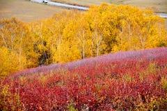Los árboles coloridos en el prado Fotos de archivo libres de regalías
