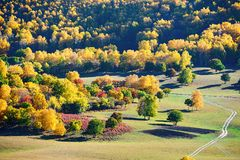 Los árboles coloridos en el prado Foto de archivo