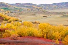Los árboles coloridos en la pradera Foto de archivo