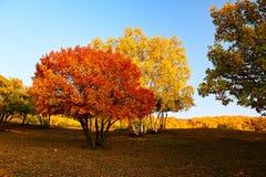 Los árboles coloridos en la puesta del sol de los prados Imagen de archivo