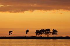Los árboles coníferos en la costa lejana foto de archivo libre de regalías