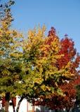 Los árboles con amarillo y rojo salen Vigonza iluminado por el sol de una ciudad en la provincia de Padua en el Véneto (Italia) Imagen de archivo libre de regalías