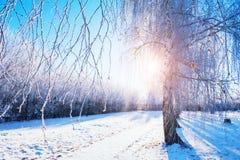 Los árboles con escarcha en invierno parquean en la salida del sol Imagenes de archivo