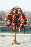 Los árboles con los bloqueos. Imagen de archivo libre de regalías
