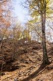 Los árboles conquistan el cielo Foto de archivo libre de regalías