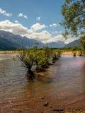 Los árboles consiguen el plumón mojado debajo Imagen de archivo libre de regalías