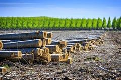 Los árboles cosechados en un grande treen la granja en Oregon del este Fotos de archivo libres de regalías