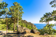 Los árboles crecen en las piedras Fotografía de archivo