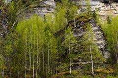 Los árboles crecen en las piedras también Imagenes de archivo