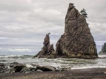 Los árboles crecen en pilas del mar en la playa arenosa foto de archivo