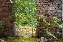 Los árboles crecen en un edificio abandonado Imagen de archivo libre de regalías