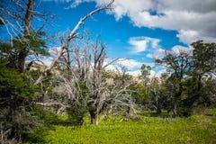 Los árboles crecen en un valle de la montaña Shevelev Fotos de archivo libres de regalías