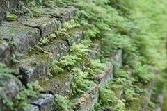 Los árboles crecieron a lo largo de la pared del templo Foto de archivo libre de regalías