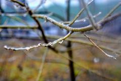 Los árboles cubiertos con hielo Foto de archivo
