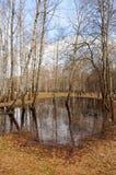 Los árboles de abedul blanco desnudos están en el bosque de la primavera en un charco grande Foto de archivo