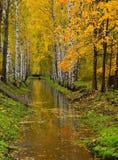 Los árboles de abedul con follaje del otoño crecen a ambos lados del canal de la irrigación Fotografía de archivo