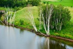 Los árboles de abedul de plata en la orilla del lago Fotos de archivo