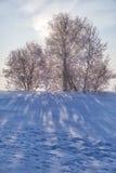 Los árboles de abedul debajo de la escarcha en campo de nieve en invierno sazonan Foto de archivo libre de regalías