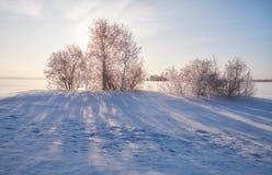 Los árboles de abedul debajo de la escarcha en campo de nieve en invierno sazonan Imágenes de archivo libres de regalías