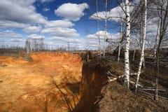 Los árboles de abedul en la mina vacía de la arena afilan en el día soleado Fotos de archivo