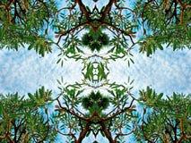 Los árboles de abedul verdes enormes del follaje y el cielo azul en la selva tropical en fondo de la naturaleza del marco texturi Imagen de archivo
