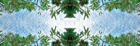 Los árboles de abedul verdes enormes del follaje y el cielo azul en la selva tropical en fondo de la naturaleza del marco texturi Fotos de archivo libres de regalías