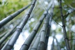 Los árboles de bambú del verano se cierran para arriba foto de archivo libre de regalías