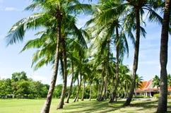 Los árboles de coco Foto de archivo libre de regalías