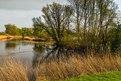 Los árboles de florecimiento reflejaron en la superficie del agua de una charca natural Fotografía de archivo libre de regalías