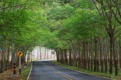 Los árboles de goma verdes hacen un túnel en el camino con las señales de tráfico fotografía de archivo libre de regalías