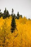Los árboles de la caída Imagen de archivo libre de regalías