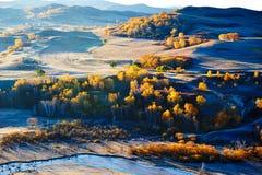 Los árboles de la caída en la ladera y el río Foto de archivo