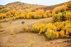 Los árboles de la caída en la ladera Imágenes de archivo libres de regalías