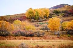 Los árboles de la caída en las montañas Imagen de archivo