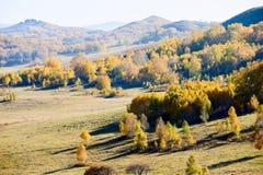 Los árboles de la caída en los prados Fotografía de archivo libre de regalías