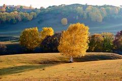 Los árboles de la caída en la puesta del sol del pasto Imagen de archivo